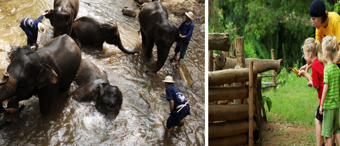 wildlife holidays with kids in thailand